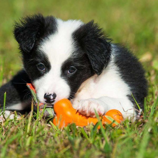 Risultati immagini per GIOCO BONE DUMMY MAJOR DOG