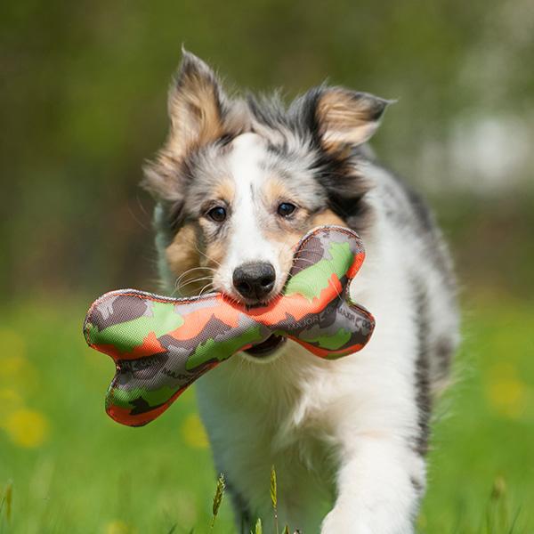 Risultati immagini per BONE di MajorDog  gioco cane