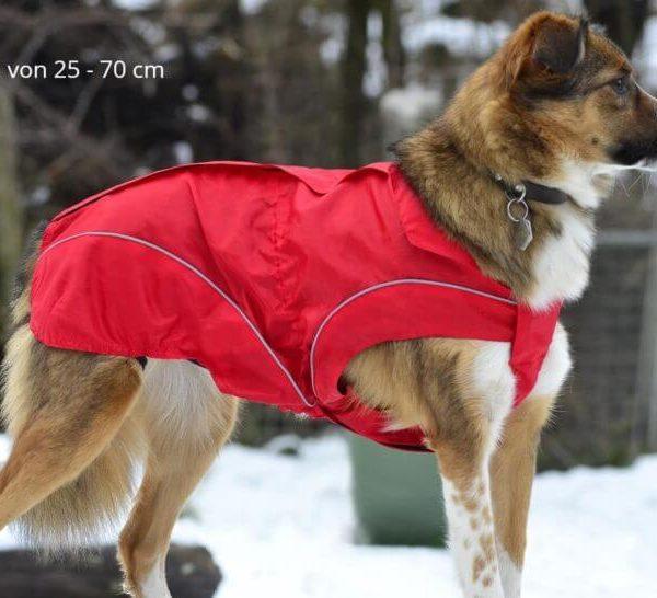 dogbite rosso