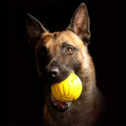 fantasti foam pallina per cani