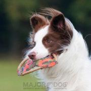 frisbee major dog