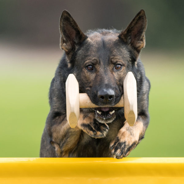 riporto in legno con cane