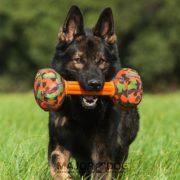 Major_dog_barbell_large_dog