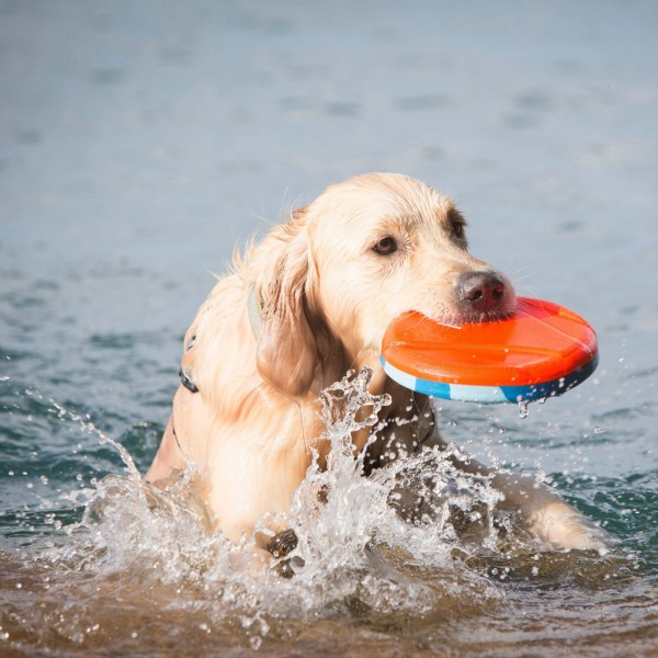 chuckit-water-skimmer