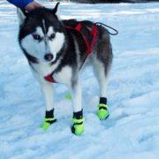 husky-con-scarpe-da-neve-neewa