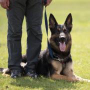 Collare in acciaio INOX da 2,5 mm diametro della maglia: 55 cm Herm Sprenger Weimaraner per cani con collo da 48 a 50 cm
