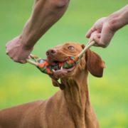 major-dog-dog-toy-tugger