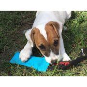 salamotto-galleggiante-tug-azzurro-per-cani (2)