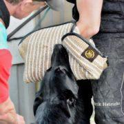 manica Gappay fox con cane (1)