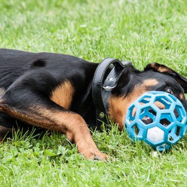 palla retata in gomma JW hol-ee roller (1)