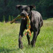 majordog braid treccia