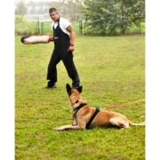 Manica Sporthund Balance (5)