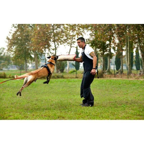 Manica Sporthund Balance (6)