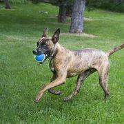 pallina kong ultra per cani